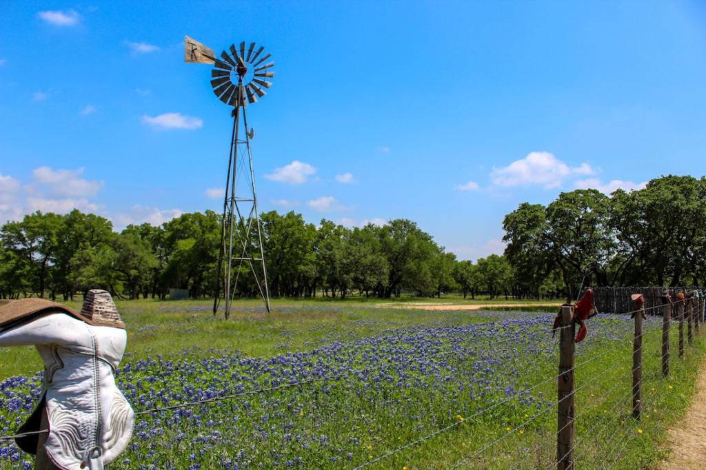 Bluebonnets near Fredericksburg