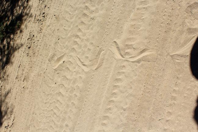 Mexico snake tracks
